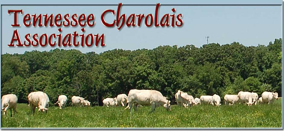 Tennessee Charolais Association